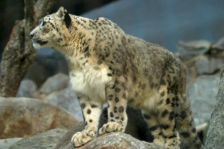 Busca Las Del De En Leopardo NievesNamaste 4A5RL3qcjS