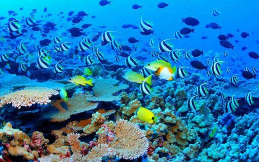 Upolu Cay Reef, Cairns (Australia)