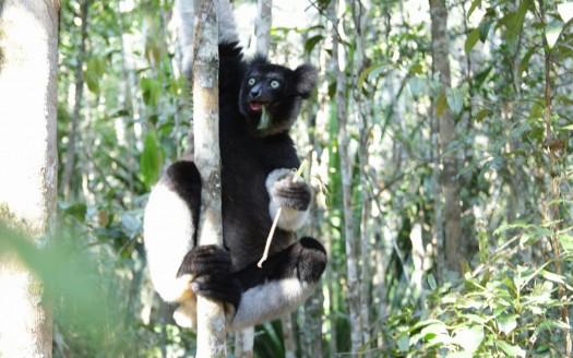 Lemur, Madagascar - Henar Martín | namasteviajes.com