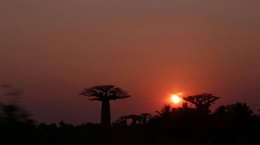 Baobabs, Madagascar - Henar Martín | namasteviajes.com