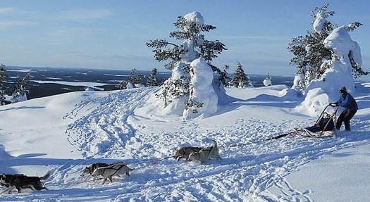 Trineos de perros, Laponia (Finlandia) | namasteviajes.com