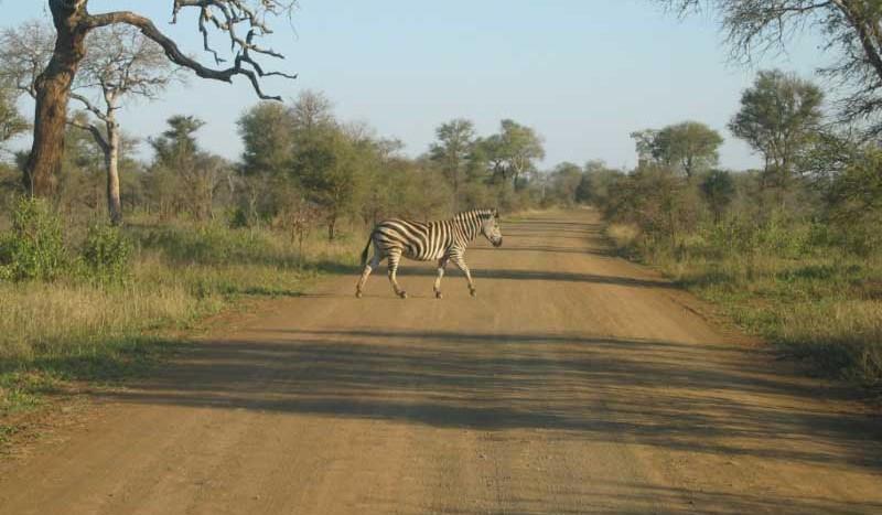 Parque Nacional Kruger, Sudáfrica - Maccoinnich | namasteviajes.com