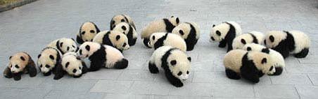 Centro de cría del Oso Panda, Chengdu (China) | namasteviajes.com
