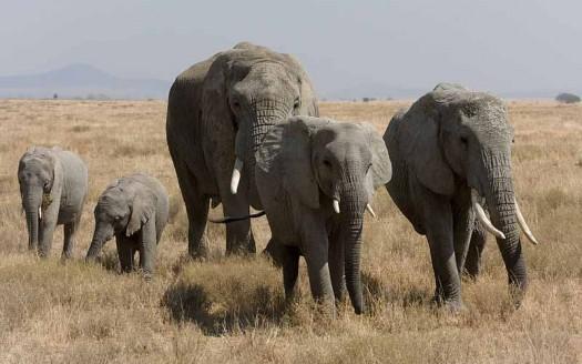 Elefantes en Serengueti, Tanzania - Ikiwaner | namasteviajes.com