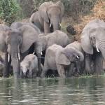 Elefantes en Canal de Kazinga, Uganda - Dror Feitelson Creative Commons Genérica de Atribución/Compartir-Igual 3.0 | namasteviajes.com