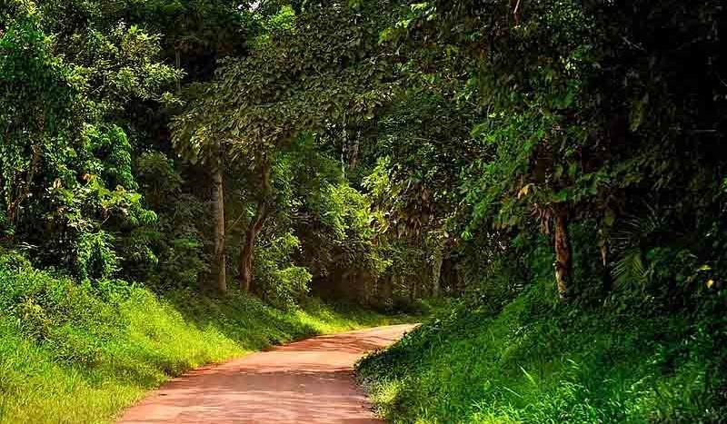 Parque Nacional de Kibale, Uganda - Rod Waddington | namasteviajes.com