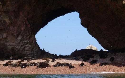 Islas Ballestas, Perú - Leon petrosyan, Creative Commons Genérica de Atribución/Compartir-Igual 3.0 | namasteviajes.com