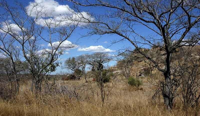 Parque Nacional Kruger, Sudáfrica - Amada44 | namasteviajes.com