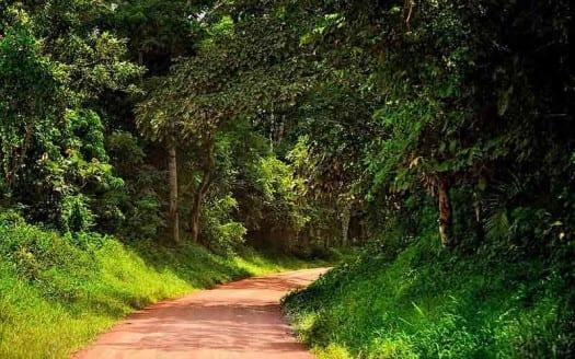 Parque Nacional Kibale, Uganda - Rod Waddingoton | namasteviajes.com