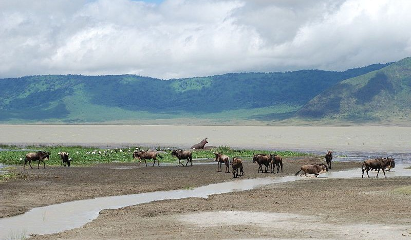 Cráter de Ngorongoro, Tanzania - Sachi Gahan from San Francisco, USA, Creative Commons Attribution-Share Alike 2.0 Generic | namasteviajes.com