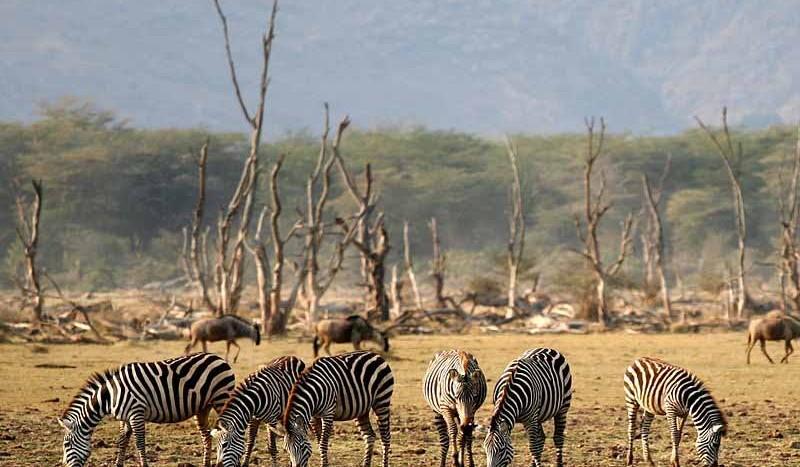 Parque Nacional del Lago Manyara, Tanzania - Gaurav Ppandit, Creative Commons Attribution-Share Alike 3.0 Unported, 2.5 Generic, 2.0 Generic and 1.0 Generic | namasteviajes.com