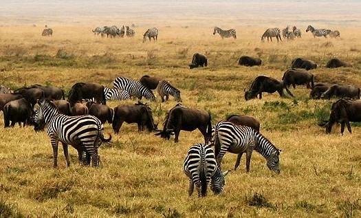 Ngorongoro, Tanzania - Gary, Creative Commons Attribution 2.0 Generic license