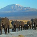 Parque Nacional de Amboseli, Kenia - Amoghavarsha JS amoghavarsha.com, Creative Commons Attribution-Share Alike 3.0 Unported license | namasteviajes.com