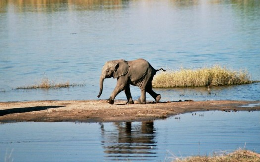 Parque Nacional Chobe, Botswana - Ian Sewell, Creative Commons Attribution-Share Alike 2.5 generic license | namasteviajes.com