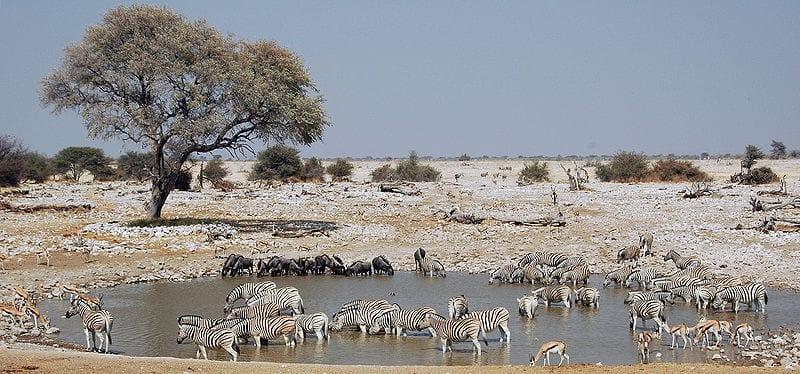 Etosha, Namibia - No machine-readable author provided. Calips assumed (based on copyright claims). Creative Commons Attribution-Share Alike 3.0 Unported 2.5 Generic license | namasteviajes.com