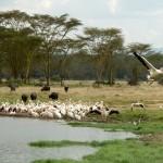 Parque Nacional Lago Nakuru, Kenia - Николай-Максимович | namasteviajes.com