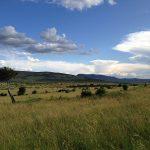 Reserva Nacional de Masai Mara, Kenia - Peter Dowley from Dubai, United Arab Emirates, Creative Commons Attribution 2.0 Generic license | namasteviajes.com