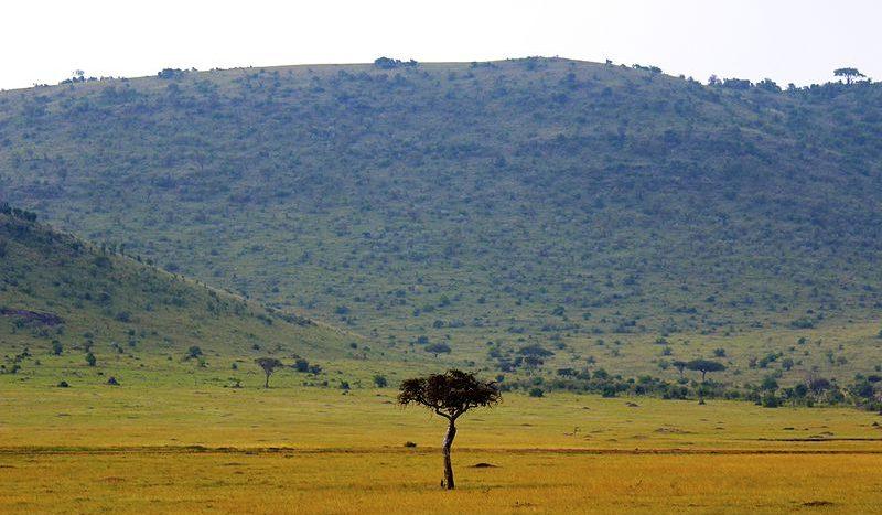 Reserva Nacional de Masai Mara, Kenia - Kev Moses, Creative Commons Attribution 2.0 Generic license | namasteviajes.com