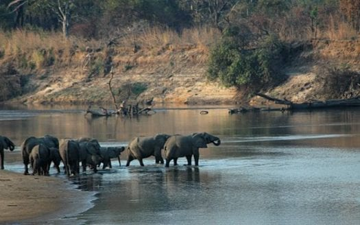 Parque Nacional de Luangwa del Sur, Zambia - (WT-en) Jpatokal at English Wikivoyage | namasteviajes.com